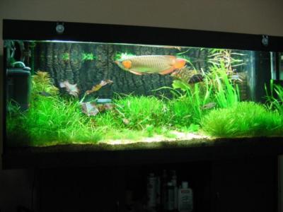 Module LED 3 bóng Epoxy chiếu sáng bể cá