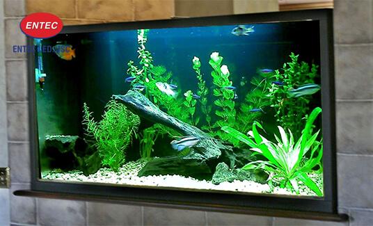 Đèn Led có thể dùng để thiết kế cho bể cá cảnh trong nhà